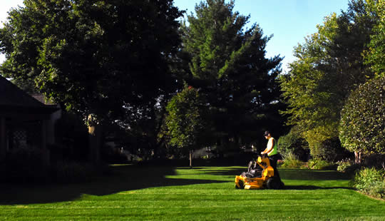 Fresh Cut Landscape Team Illinois Landscaping And Mulch Installation Services